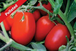 Tachi Tomato
