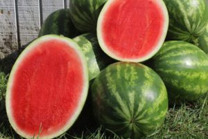 Tailgate Seedless Watermelon