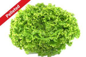 Tehama Lettuce