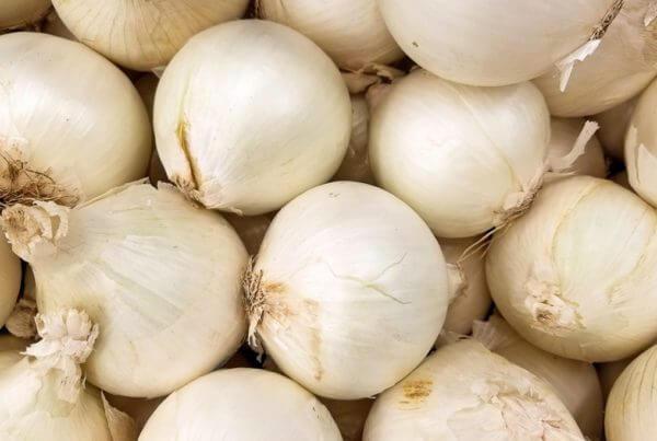 Texas Early White Onion