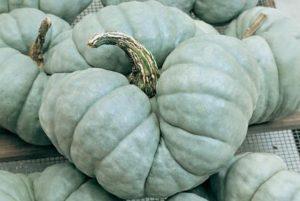 Triamble Pumpkin
