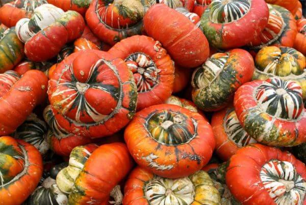 Turks Turban Gourd