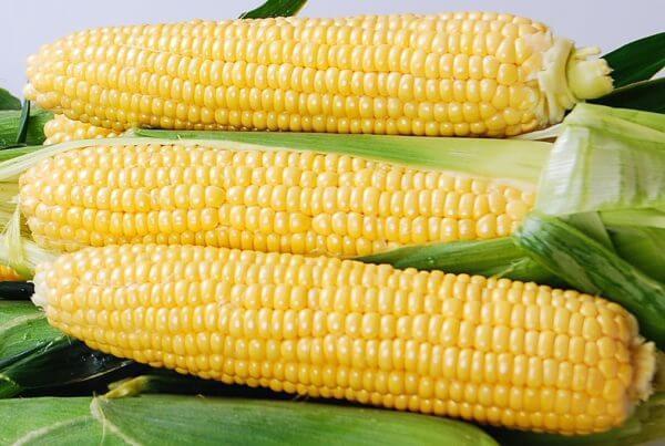 Yellowstone Sweet Corn