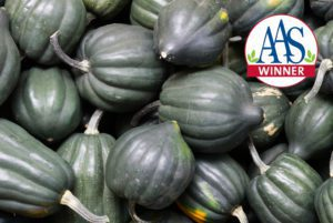 Table King Bush Acorn Squash