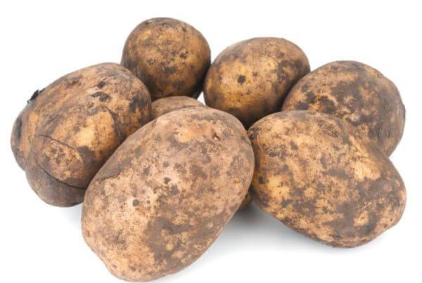 Irish Cobbler Potato