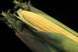 Kandy Korn Sweet Corn