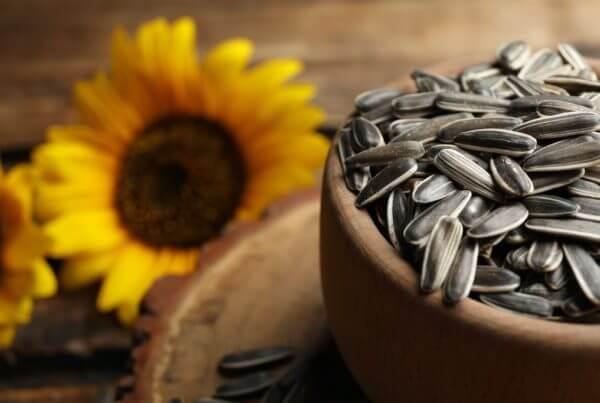 Salt N' Roast Sunflower
