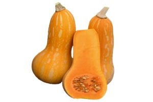 Autumn Gold Butternut Squash