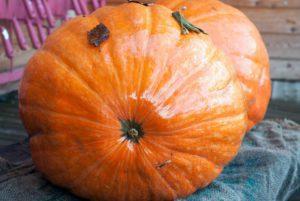 Big Max Pumpkin