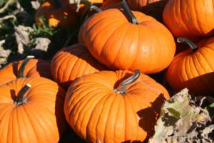 Flatso Pumpkin