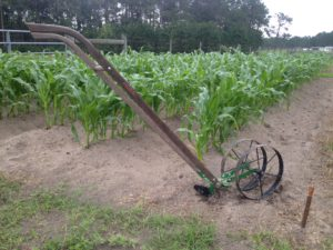corn-garden-fertilizer-injector
