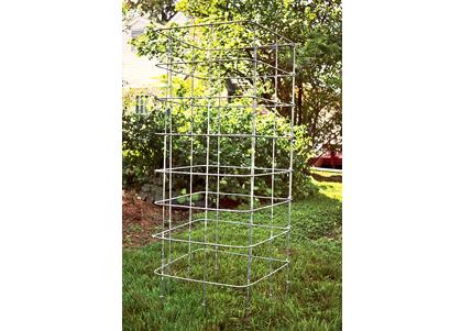 tomato-cage-