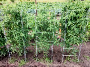 Trellis Tomatoes The Best Ways To Support Your Plants